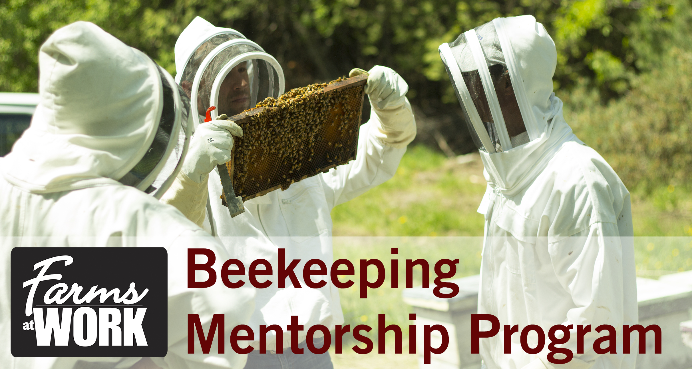Beekeeping Mentorship - Checking Hives